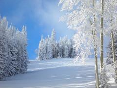 Snow Trees Powder Mountain