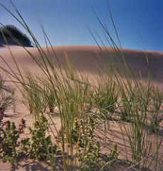 Grass on sand