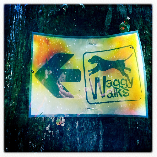 Waggy Walks, Stanmer Park